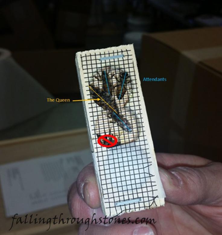 queen-box01